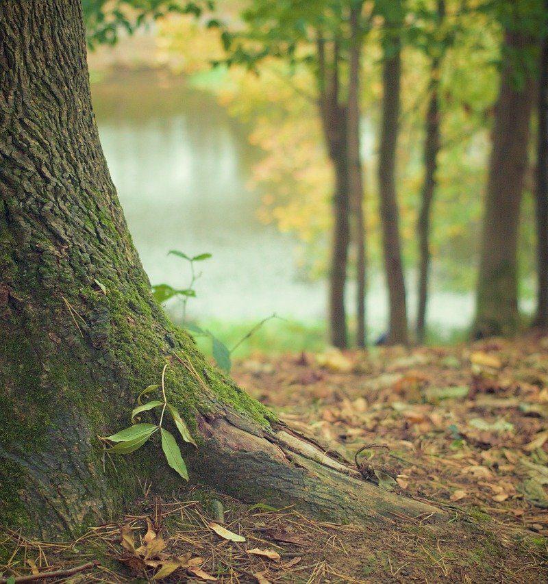 Prześliczny oraz {porządny zieleniec to nie lada wyzwanie, w szczególności jak jego pielęgnacją zajmujemy się sami.